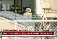DEA Bust Massive Illegal Weed Ring in Colorado