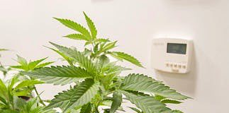 Cannabis and Humidity 101 the Fundamentals of Grow Room Humidity Control