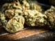 Largest-marijuana-producer-in-Canada-has-concerns-with-proposed-regulations-