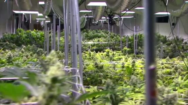 medical marijuana and privacy concerns and
