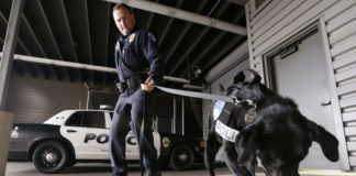 What do drug-sniffing police dogs do when pot is made legal