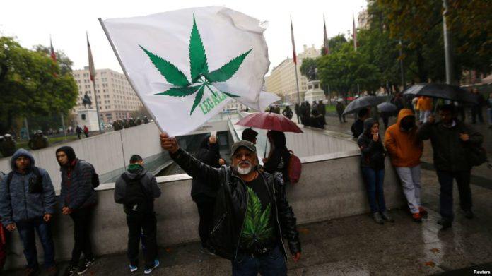 Paraguay Congress legalizes planting of medical marijuana